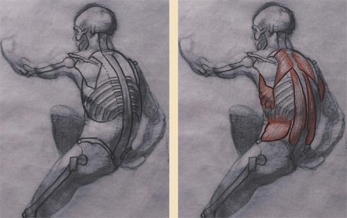 Anatomy Life Drawing For Figure Drawing