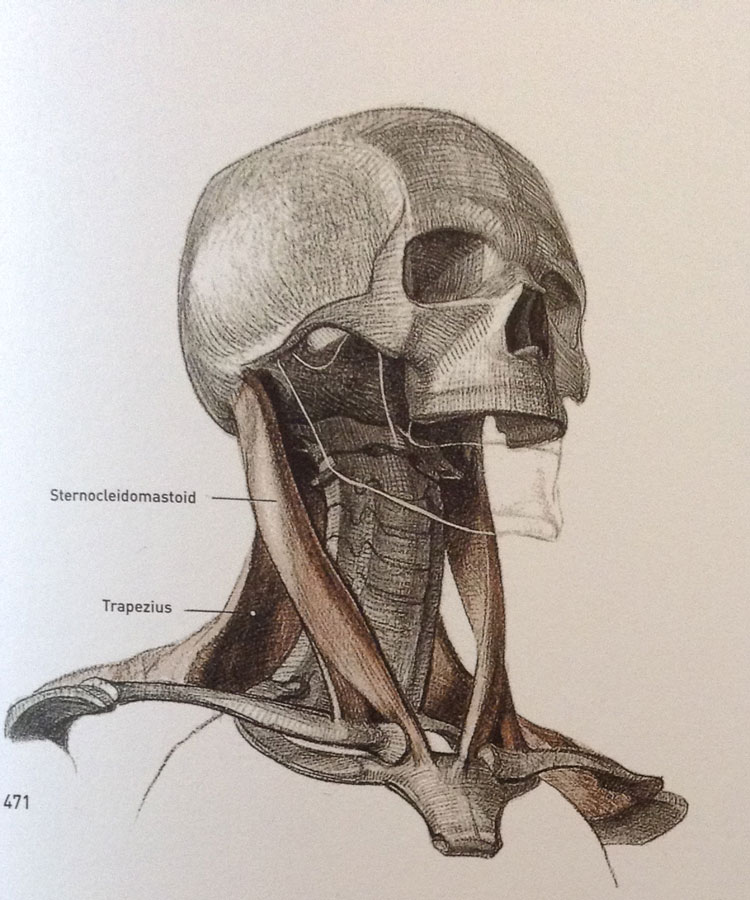 Review of Bammes The Complete Guide to Anatomy | Love life drawing
