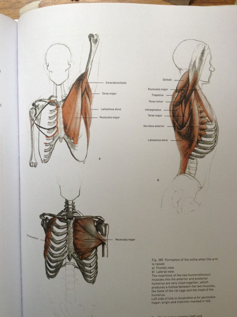 Review Of Bammes The Complete Guide To Anatomy Love Life Drawing
